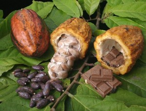 cacao-to-chocolate
