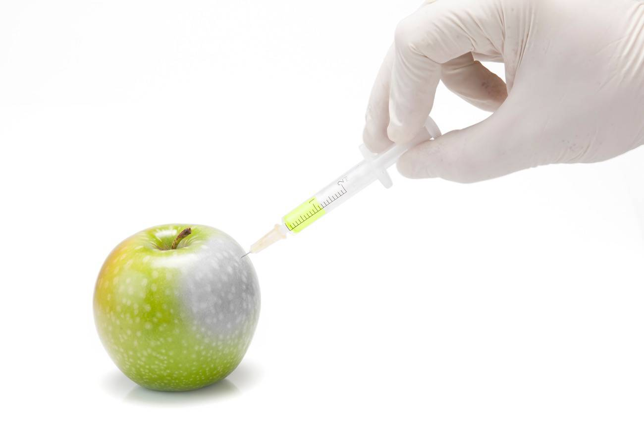 manzana transgénica