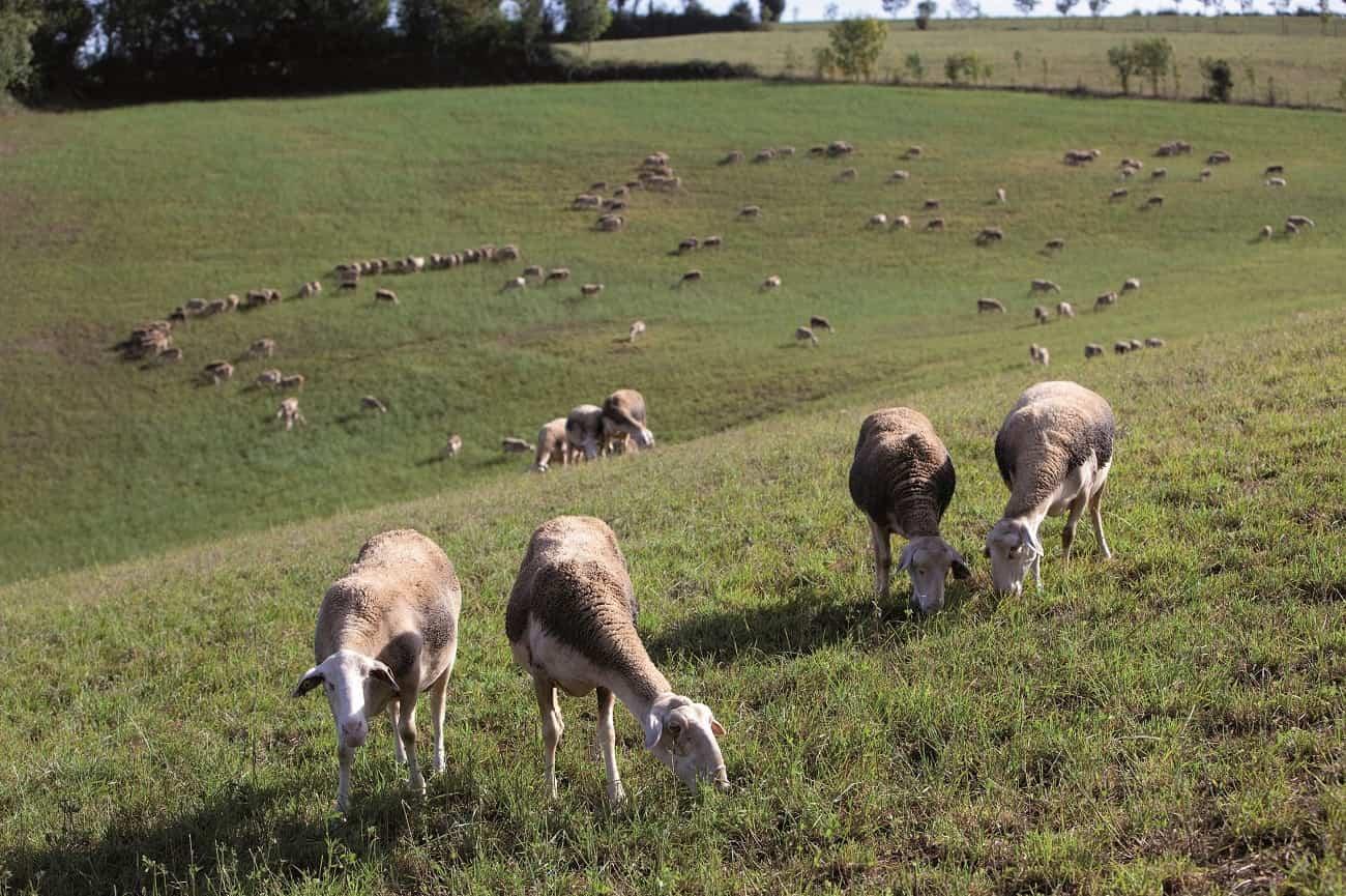 animales pastando libremente