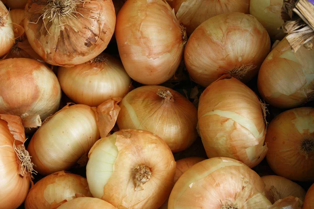 mermelada cebolla